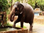 Kerala Honey Moon Packages From Sahayatri Tours