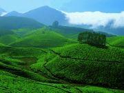 Green Kerala Executive Package