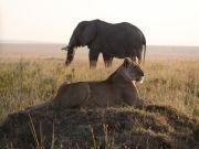 Masai Mara & Lake Nakuru Combo