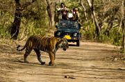The Roar Jim Corbett National Park