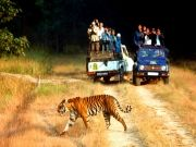 Sariska One Day Tiger Safari
