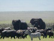 The Big 5 Safari ( 6 Days/ 5 Nights )