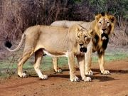 Highlight of Gujarat Tour Package (  5 Nights )