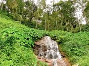 Mysterious Coorg