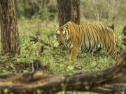 Wayanad & Kabini From Bangalore
