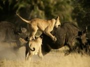 One Night In Mara Free - 3nts For Price Of 2