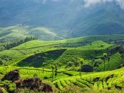 Kerala Deluxe Package - 4 Nights / 5 Days ( 5 Days/ 4 Nights )