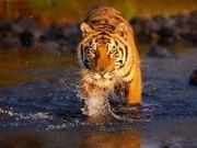 Exotic Uttaranchal