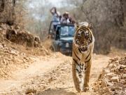 Haridwar - Rishikesh - Mussoorie – Nainital – Corbett Tour P