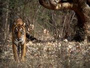 Ranthambore Special Tour ( 3 Days/ 2 Nights )