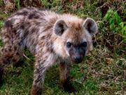 The secrets of Kenya safari.