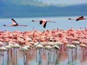 Best of Kenya Trip ( 11 Days/ 10 Nights )