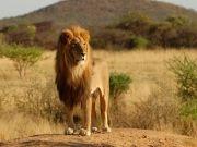 4days Tanzania Big Tour