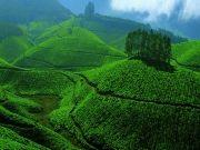 Greenery of Kerala - 4 Nights / 5 Days