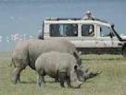 Amboseli To Lake Naivas  8days/7nights