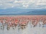 Amboseli To Lake Naivas  8days/7nights
