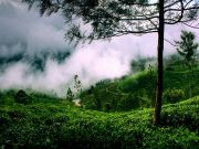 God\'s Own Country Kerala Tour 5Night/6Days