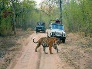 Rajasthan Wild Life ( 4 Days/ 3 Nights )