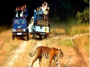Best of India Wildlife Tour 16Days/15Nights
