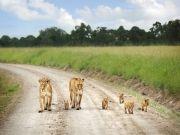Masai Mara 3 Days / 2 Nights