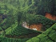 Magical Kerala Package ( 8 Days/ 7 Nights )