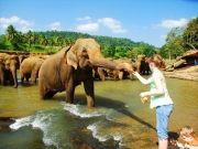 Sri Lankan Honeymoon Dreams ( 7 Days/ 6 Nights )