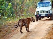 Wildlife Tour at Manash National Park