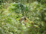 Jim Corbett Tour With Jungle Safari