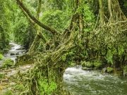 Tour To Meghalaya 3 Nights / 4 Days