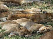 Tanzania Affordable Wildlife Tour (  6 Nights )