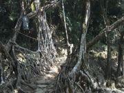 Meghalaya - Trekking Tour