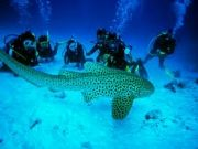 Amazing Andaman Package 5 Nights / 6 Days