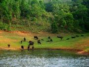 Kerala Tour Package 06 Days ( 6 Days/ 5 Nights )