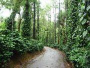 Southern Splendour With Coorg And Ooty Deluxe Tour