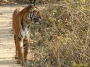 Kumaon Wildlife And Culture Tour ( Luxury ) Inr 50500 Per