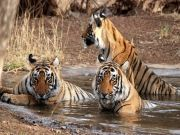 Ranthambore Package ( 5 Days/ 4 Nights )