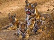 Safari Tour Of Central India Amazing Tour