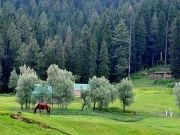 Beauty of Kashmir tour package 3nights/4days ( 4 Days/ 3 Nights )