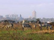 Nairobi National Park tour, Delphine Sheldrick Elephant Orph