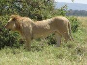 Masai Mara Vacation - Kenya Tour