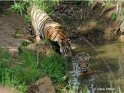 Tadoba Andhari Tiger Reserve Tour (  3 Nights )