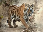 Tadoba Andhari Tiger Reserve Tour Package