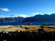 Ladakh Shangirala