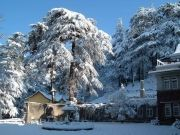 Shimla 3*holiday Package With Volvo
