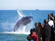 Whale Watching Special Offer