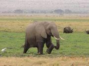 5 Days Kenya - Safari Tour