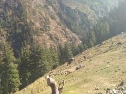 Parvati Valley, Kasol -manikarn -malana And Kheerganga Tour