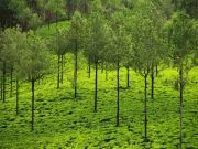 Luxury Wayanad