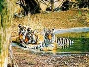 Exotic Tadoba Tour Package