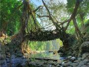 Shilong And Kaziranga National Park (min 10 Adults)